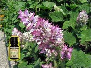 Clary Sage Essential Oil - 6 ml