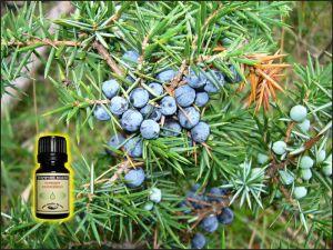 Juniper Essential Oil - 6 ml