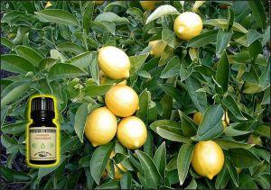 Lemon Essential Oil - 10 ml