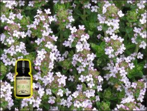 Thyme Essential Oil - 5 ml